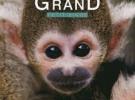devenir-grand-singe